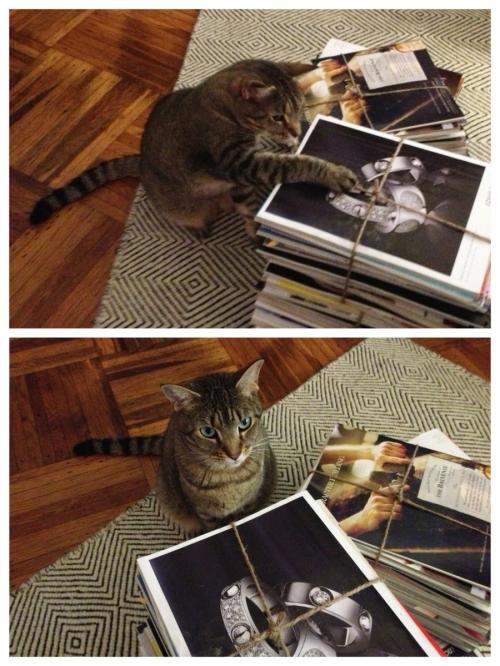 Urban Cholita: Kitty