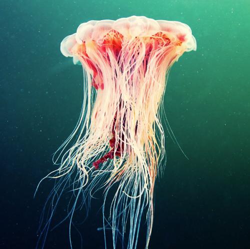 Urban Cholita: Jellyfish by Alexander Semenov